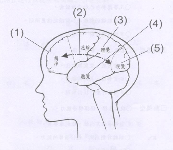 大脑的作用0202021020202小脑的巨大作用